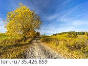 Road with autumn tree near saddle Beskyd in Slovakia. Стоковое фото, фотограф Richard Semik / easy Fotostock / Фотобанк Лори