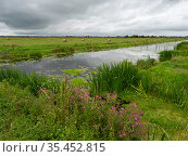 North drain and hay bales, Tadham Moor, Avalon Marshes, Somerset Levels and Moors, Somerset, England, UK, July. Стоковое фото, фотограф Mike Read / Nature Picture Library / Фотобанк Лори