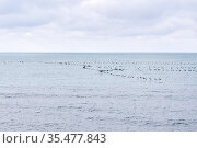 Seascape with a flock of migratory birds flying low over the water. Стоковое фото, фотограф Евгений Харитонов / Фотобанк Лори