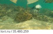 Стайка рыб на мелководье у небольшого кораллового рифа. Хиккадува, Шри-Ланка (2020 год). Стоковое видео, видеограф Виктор Карасев / Фотобанк Лори
