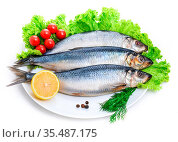 Salted herring with red tomato and parsley. Стоковое фото, фотограф Zoonar.com/{Sergieiev} / easy Fotostock / Фотобанк Лори