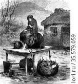 Potato Famine: Irish peasant girl guarding the family's last few  ... Редакционное фото, агентство World History Archive / Фотобанк Лори