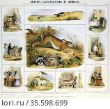 Hare and Rabbit: used for meat; fur; 'beaver hats'; pets and for ... Редакционное фото, агентство World History Archive / Фотобанк Лори
