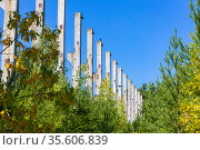 old abandoned industrial building overgrown with trees sunny day. Стоковое фото, фотограф Акиньшин Владимир / Фотобанк Лори