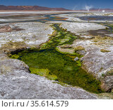 Thermal spring drains into Laguna Salada, in the high altiplano, Bolivia. In the distance, whirlwinds of salt dust rise from the shore. March 2014. Стоковое фото, фотограф John Shaw / Nature Picture Library / Фотобанк Лори