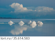 Salt cones on the Salar de Uyuni, Bolivia. March. The Salar is the world's largest salt flat, at over 10500 square kilometers. Salt is shoveled into these cones, to be collected later. Стоковое фото, фотограф John Shaw / Nature Picture Library / Фотобанк Лори