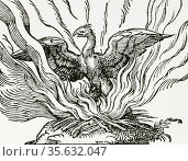'The Phoenix a fabulous bird which at the end of life makes a nest... Редакционное фото, агентство World History Archive / Фотобанк Лори