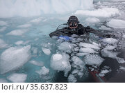 Franco at the surface, ready for a dive under the ice, Tasiilaq, ... Стоковое фото, фотограф Franco Banfi / age Fotostock / Фотобанк Лори