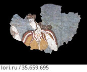 Wall paintings form the Acropolis of Mycenae. Iconographic imagery... Редакционное фото, агентство World History Archive / Фотобанк Лори
