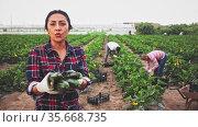 Successful colombian female farmer engaged in organic vegetables growing, showing harvest zucchini on farm field. Стоковое видео, видеограф Яков Филимонов / Фотобанк Лори