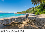 Log on the Coast, wild Anse Major beach, part of the Baie Tarney Marine... Стоковое фото, фотограф Valeriy Tretyakov / easy Fotostock / Фотобанк Лори