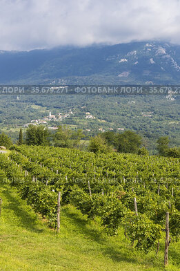 Vipava valley in Gorice region, Slovenia.
