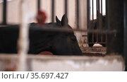 Horses stands in the stall. Стоковое видео, видеограф Константин Шишкин / Фотобанк Лори