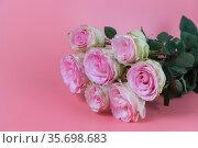 Нежно-розовые розы. Стоковое фото, фотограф Наталья Гармашева / Фотобанк Лори