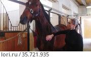 Equestrian sport - a woman strokes a horse in a stall. Стоковое видео, видеограф Константин Шишкин / Фотобанк Лори