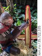 Dani tribe man preparing Pandanus palm fruit, Budaya village, Suroba, Trikora Mountains, West Papua, Indonesia. March 2018. Стоковое фото, фотограф Pete Oxford / Nature Picture Library / Фотобанк Лори