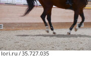 Equestrian sports - a horse running on the hippodrome field. Стоковое видео, видеограф Константин Шишкин / Фотобанк Лори