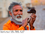 Local snake charmer holding Indian cobra in the street of Jaipur, ... Стоковое фото, фотограф Zoonar.com/Don Mammoser / age Fotostock / Фотобанк Лори