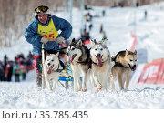 PETROPAVLOVSK-KAMCHATSKY, KAMCHATKA, RUSSIA - MARCH 2, 2014: Running... Стоковое фото, фотограф Zoonar.com/Alexander A. Piragis / age Fotostock / Фотобанк Лори