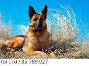 ZON-4546153. Стоковое фото, фотограф Zoonar.com/Kerstin Hennig / age Fotostock / Фотобанк Лори