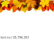 Autumn leaves border frame isolated on white background. Стоковое фото, фотограф Zoonar.com/Ivan Mikhaylov / easy Fotostock / Фотобанк Лори