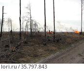 Сжигание порубочных остатков в спиленном лесу. Стоковое фото, фотограф Бабкина Марина / Фотобанк Лори