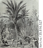 A plantation in Cuba. The garden of Santa Elena. after a drawing by Mr. Trobriand. Редакционное фото, агентство World History Archive / Фотобанк Лори