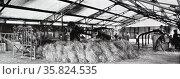 Indonesian lemon grass factory. Редакционное фото, агентство World History Archive / Фотобанк Лори