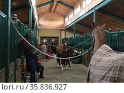 КСК Звёздный, вольеры для лошадей. Редакционное фото, фотограф Дмитрий Неумоин / Фотобанк Лори