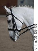 Голова белой лошади. Редакционное фото, фотограф Дмитрий Неумоин / Фотобанк Лори