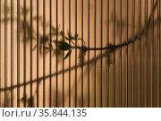 Abstract background - leaves of living trees shine through a translucent polycarbonate sheet. Стоковое фото, фотограф Евгений Харитонов / Фотобанк Лори