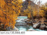 Autumn view of the Bolshoy Ilgumen river at its confluence with river the Katun. Altai Republic, Russia. Стоковое фото, фотограф Наталья Волкова / Фотобанк Лори