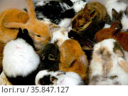 Young rabbits and guinea pigs in a store. Стоковое фото, фотограф Zoonar.com/BONZAMI Emmanuelle / age Fotostock / Фотобанк Лори
