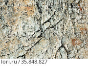 Macro view of cracked stone surface brown and grey color. Detailed... Стоковое фото, фотограф Zoonar.com/Alexander A. Piragis / age Fotostock / Фотобанк Лори