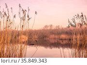 Small idyllic lake on a misty autumn morning. Стоковое фото, фотограф Zoonar.com/Kasper Nymann / age Fotostock / Фотобанк Лори