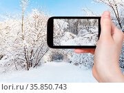 Travel concept - tourist photographs of snow-covered branches in city... Стоковое фото, фотограф Zoonar.com/Valery Voennyy / easy Fotostock / Фотобанк Лори