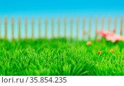 Rasen Gras Wiese im grünen Garten mit Blumen und Lattenzaun. Стоковое фото, фотограф Zoonar.com/Robert Kneschke / age Fotostock / Фотобанк Лори