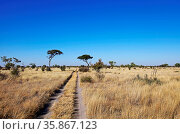 Landschaft der Central Kalahari Game Reserve, CKGR, Botswana, landscape... Стоковое фото, фотограф Zoonar.com/W. Woyke / age Fotostock / Фотобанк Лори