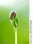 Shoot growing. Стоковое фото, агентство Ingram Publishing / Фотобанк Лори