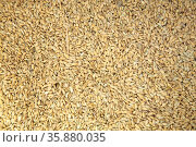 Rice. Стоковое фото, агентство Ingram Publishing / Фотобанк Лори