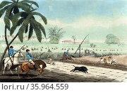 Beating sugar-canes for a hog by Samuel Howitt, Редакционное фото, агентство World History Archive / Фотобанк Лори