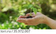 Asian woman holding plant in garden on sunny day. Стоковое видео, агентство Wavebreak Media / Фотобанк Лори