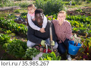 Portrait of a multinational family in the vegetable garden with a basket of harvested crops. Стоковое фото, фотограф Яков Филимонов / Фотобанк Лори