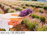Hands of a woman holding a hat with a bunch of lavender into on a... Стоковое фото, фотограф Zoonar.com/OKSANA SHUFRYCH / easy Fotostock / Фотобанк Лори