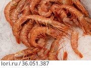 Red argentine shrimps on an ice for sale. Стоковое фото, фотограф Володина Ольга / Фотобанк Лори