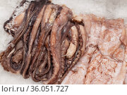 Squid and octopus tentacles on an ice for sale. Стоковое фото, фотограф Володина Ольга / Фотобанк Лори