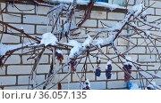 Зимний пейзаж с заснеженным лесом в россии крупным планом. Стоковое фото, фотограф Андрей Атрощенко / Фотобанк Лори
