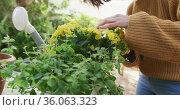 Midsection of caucasian woman repotting yellow flowers in sunny garden. Стоковое видео, агентство Wavebreak Media / Фотобанк Лори