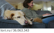 Smiling caucasian woman using laptop working from home with her pet dog on sofa next to her. Стоковое видео, агентство Wavebreak Media / Фотобанк Лори