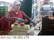 Woman checking and marking peaches in boxes. Стоковое фото, фотограф Яков Филимонов / Фотобанк Лори